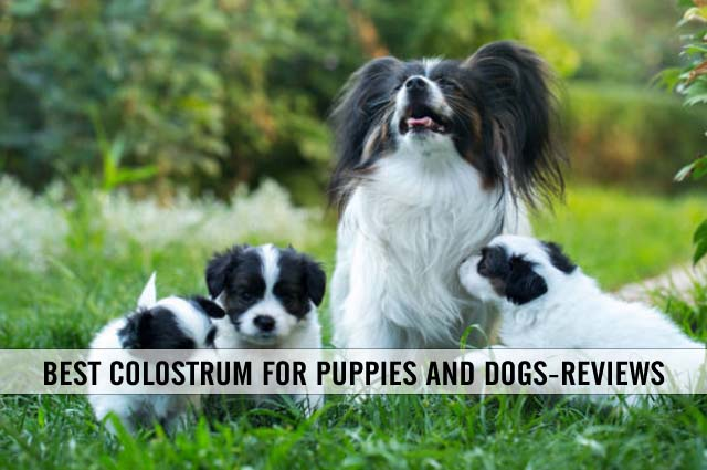 best colostrum for puppies and dogs reviews