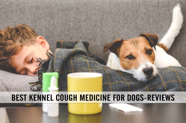 best kennel cough medicine for dogs reviews