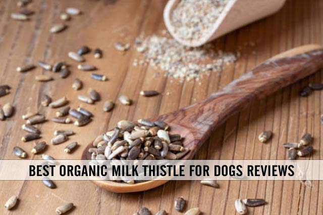 best organic milk thistle for dogs reviews