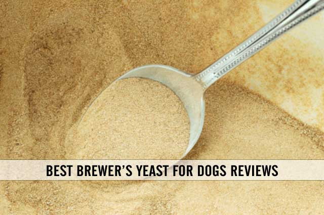 best brewer's yeast for dogs reviews