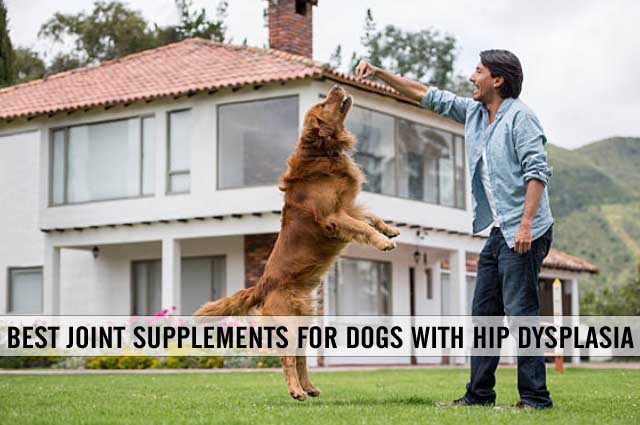 best joint supplement for dogs with hip dysplasia