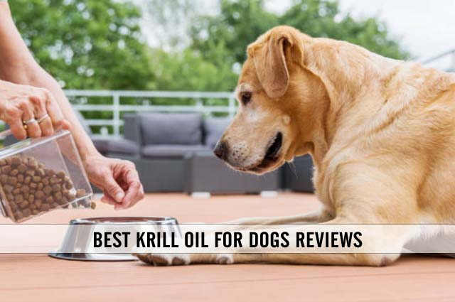 best krill oil for dogs reviews