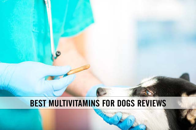 best multivitamins for dogs reviews