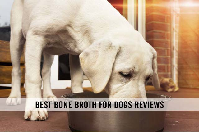 best bone broth for dogs reviews
