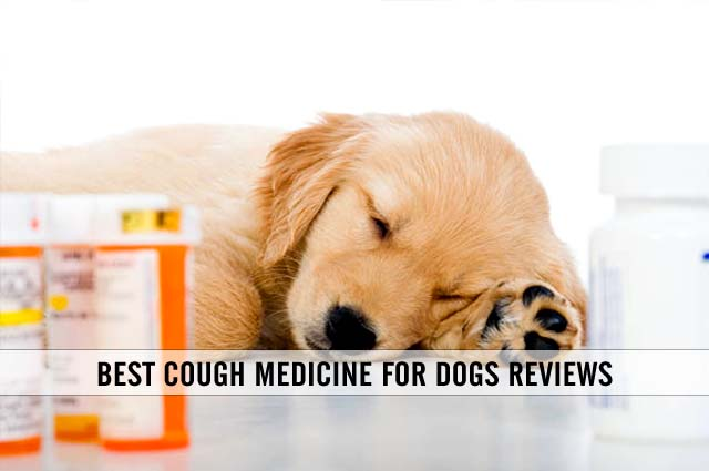 best cough medicine for dogs reviews