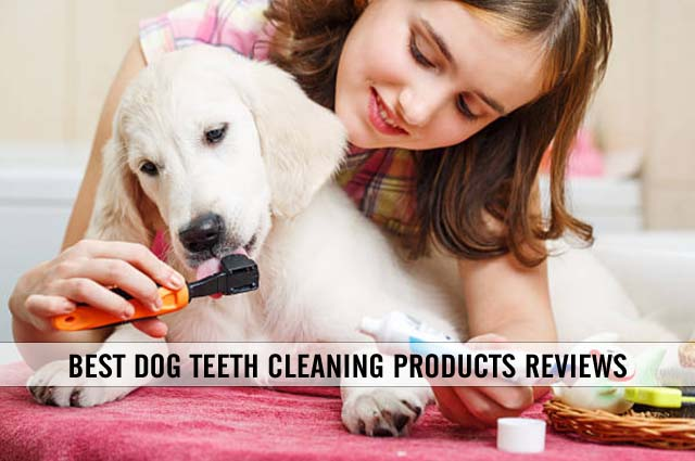 best dog teeth cleaning products reviews