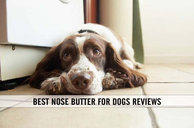 best nose butter for dogs reviews