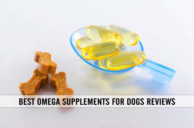 best omega supplements for dogs reviews
