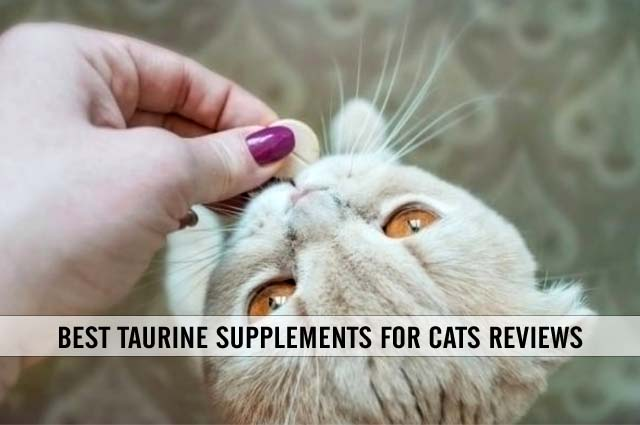 best taurine supplements for cats reviews