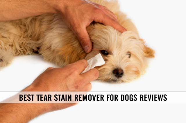 best tear stain remover for dogs reviews