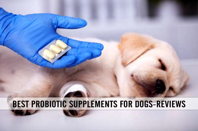 best probiotic supplements for dogs reviews